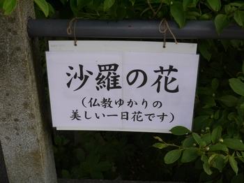 P1030725 - コピー.JPG