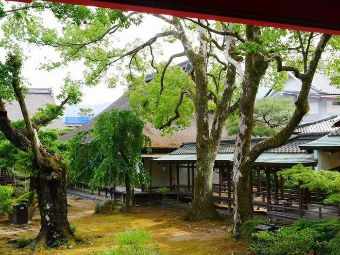 P1310257大覚寺.jpg